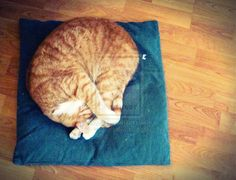 Sleeping beauty by swapthat on DeviantArt Sleeping Beauty, Deviantart, Cats, Artist, Photography, Animals, Gatos, Photograph, Kitty Cats