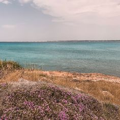 Puglia - The Travel Guide — Lilaproject Food Spot, Do Anything, Public Transport, The Locals, Tuscany, Travel Guide, Italy, Beach, Water