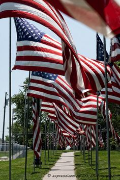 July 4 Flags Fly in Honor of our Vets. I Love America, God Bless America, American Spirit, American Pride, Memorial Day, Patriotic Pictures, Independance Day, Us Vets, Sea To Shining Sea