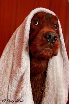 Casey loved a bath but the fight started when the towel would come out - photo by Kenny Jarvis