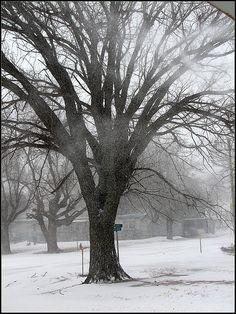 the big elm tree by rod murrow, via Flickr