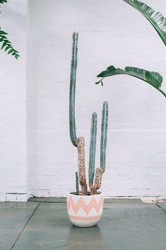 des_cactus_plein_la_maison_7