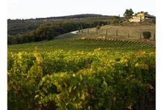 Conti di San Bonifacio wine resort in Tuscany.