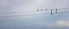 ITAP of three birds. http://ift.tt/2hqqZGF