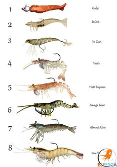Infografías de peces 13