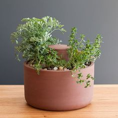 Self-Watering Planter by Joey Roth  - Ancient Native American irrigation systems inspire a thoroughly modern gardening vessel