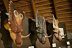 Dinosaurs in Spain: The Jurassic Museum of Asturias (MUJA)