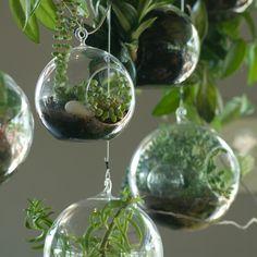 boule en verre à suspendre, plantes vertes, terreaux, cailloux décoratifs, terrarium végétal