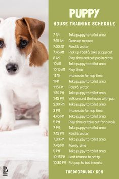 Our top dog training tips for a new puppy! Try these simple lessons to get your pup comfortable in their new home New Puppy Checklist, Puppy Schedule, Puppy Training Schedule, Training Your Puppy, Dog Training Tips, House Training A Puppy, Dog Training Treats, Agility Training, Potty Training