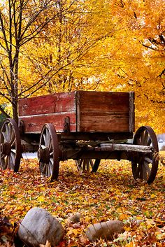 Let's go for a wagon ride!