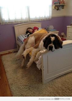 Looks like someone is gonna need a bigger bed