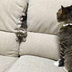 埋め込み画像 and like OMG! get some yourself some pawtastic adorable cat shirts, cat socks, and other cat apparel by tapp
