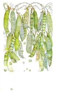 """Illustration by Sara Midda - I own a beautiful book of hers called """"In and Out of the Garden. Art Journal Pages, Art Journals, Illustrations, Illustration Art, Marjolein Bastin, Poster Art, A Level Art, Botanical Prints, Food Art"""