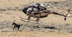 On Thursday, the National Wild Horse and Burro Advisory Board recklessly voted to approve recommendations that call on ...