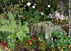 stumpery - slosh an occasional layer of liquid comfrey or old yogurt over them to encourage mosses and lichens to develop. Shade Garden, Garden Plants, Full Sun Garden, Topiary Garden, Woodland Garden, Garden Theme, Shade Plants, Landscaping Plants, Garden Spaces