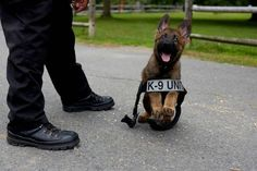 K-9 pup's first day on the job