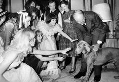 """Valéry Giscard d'Estaing présente """"Jugurtha"""", son braque de Weimar, aux artistes qui ont participé à l'arbre de Noël, le 14 décembre 1977 à l'Elysée. Parmi eux, figure Mireille Mathieu. STF / AFP // #dog"""