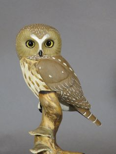 Northern Sawwhet Owl by GeneBoyd on Etsy, $650.00