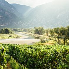 New Similkameen Valley Winery Releases its 2016 Vintage  A new organic, Similkameen vineyard is set to debut their 2016 vintage. The riverfront vineyard and winery located in Cawston was purchased by Nicole and Mike Dowell in March 2016, and will focus on small lot wine, produced from organic grapes.  Liber Farm, named …