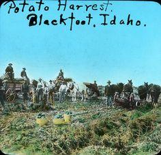 [IDAHO-J-0091] Blackfoot Potato Harvest