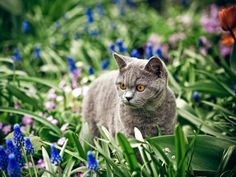 Did you know that it might be risky to let your #cat explore its wild roots on its own? #pets