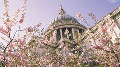 Primavera de Londres - Flores de cerejeira deixam a Catedral de São Paulo ainda mais linda.