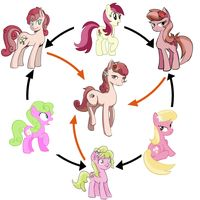 mlp fusion images | Hexafusion / Triple Fusion