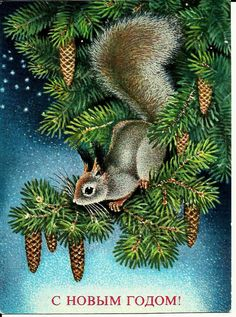 Squirrel Vintage Russian Postcard
