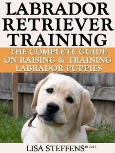 Labrador Retriever Training:  Breed   Specific Puppy Training Techniques, Potty Training, Discipline, and Care   Guide #puppypottytrainingtips