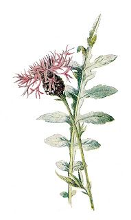 stock digital wildflower image