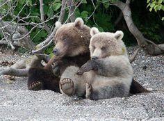 Sow and cub at Lake Kuislskoye in Kamchatka, Russia. 3 Bears, Bear Cubs, Cute Bears, Animals Beautiful, Cute Animals, Cinnamon Bears, In The Zoo, All Gods Creatures, Love Pet