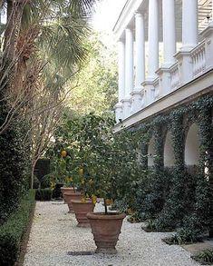 G.P. Schafer + Courtyard + Charleston, SC + Potted Lemon | http://gardendesigncollections.blogspot.com