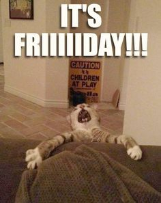 39 Best Tgif Images Animal Pictures Happy Friday Messages