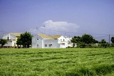 campos chufa en valencia