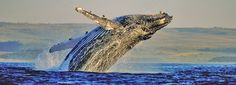 Whale watching | Whale Capital of the World