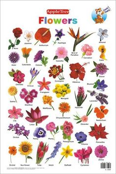 Diagrams for flower garden online schematic diagram beautiful all new poster from greens of devon edible flower rh pinterest com backyard flower gardens diagrams of flower gardens ccuart Images
