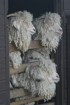 Seven Sisters Sheep Centre, Sussex, England
