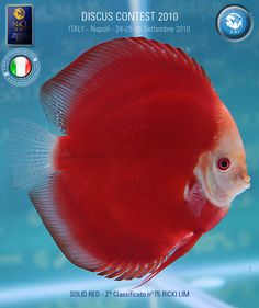 Image from http://www.napoliaquatica.com/images/stories/WorldDiscusChampionshipWinner/Red2.jpg.
