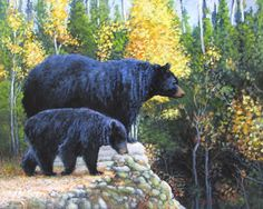 Black Bear and Cub,