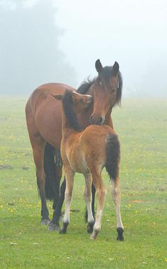 Mum and foal cuddle by Nathan Hammonds