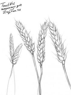 Как нарисовать пшеницу карандашом поэтапно 3