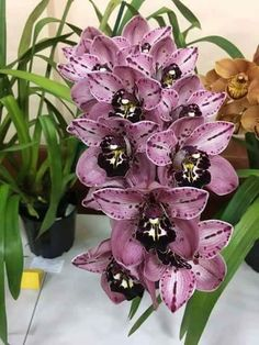 Wonderful Pic cymbidium Orchids Style Orchid, a plant with splendor in addition to beauties beauty, has above 700 varieties, greater than over 2500 Unusual Flowers, Amazing Flowers, Beautiful Flowers, Orchid Wallpaper, Orchid Varieties, Growing Orchids, Bloom, Flower Garden Design, Cymbidium Orchids