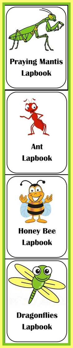 SUMMER LAPBOOKING! Great for a large (or small) science unit on insects... Praying Mantis, Ant, Honey Bee and Dragonfly lapbooks ready to download! http://www.christianhomeschoolhub.com/pt/Entomology--Insects-Teaching-Resources-and-Downloads-/wiki.htm