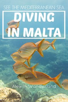 Diving Malta's famous Blue Hole and seeing the Azure Window from a unique angle are just two reasons to dive into the Mediterranean in Malta.  An excellent dive site! | Alex in Wanderland