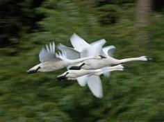 lake rebecca park reserve mn - Bing Images