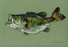 8x11 Largemouth Bass Fish River Fishing Fly Original Art Watercolor Juan Bosco | eBay