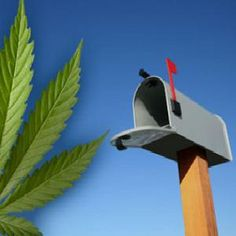 Fewer marijuana packages found in US mail after recreational marijuana sales legalized