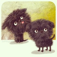 sohogarth ... Nicknamed 'the Black Devil', this cheeky monkey face loves mischief! The adorable Affenpinscher is my Dog a Day number 21. #affenpinscher
