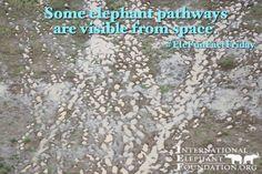 """Happy #EleFunFactFriday!!!  Some #elephant pathways are visible from space! #ElephantFriday #EleFactFriday"""