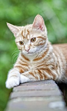 gato + https://www.pinterest.com/susanbasdendaw/kitties/